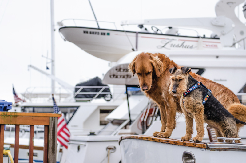 Dogs Sailing Cape Cod